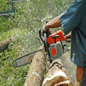 Tree Surgery and Felling by Country Gardens and Landscapers in Haverhill, Suffolk